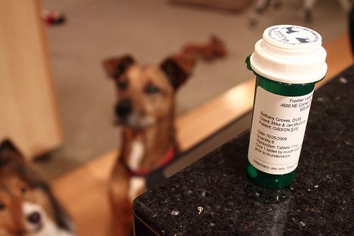 Dogs & Meds